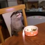 食事をするカワウソ。行儀いいと思ったら。。。笑