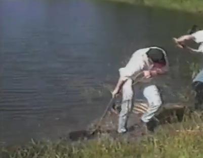 穴に落ちたビーバーを救出。が大惨事に?!