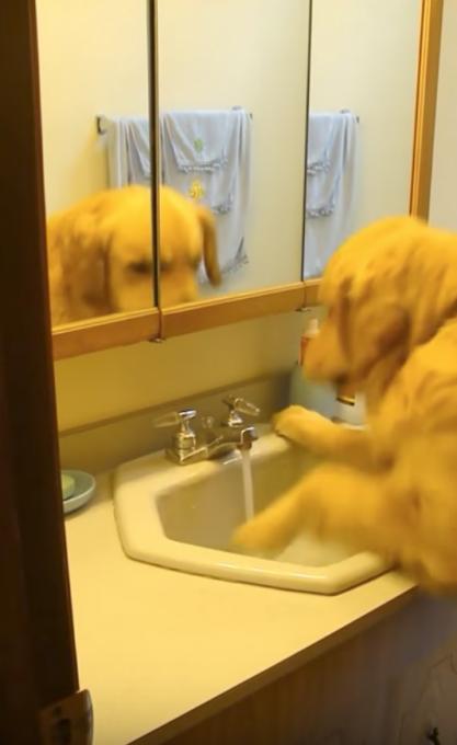 自分で蛇口をひねって水を飲む犬