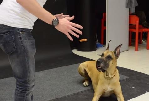 マジックでウィンナーを中に浮かせたときの犬の反応は・・・!?