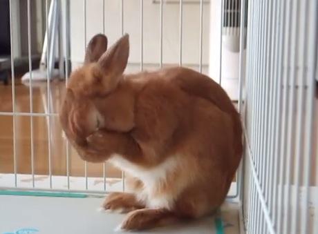 ウサギが寝る支度をして寝るまでの姿がカワイイ〜