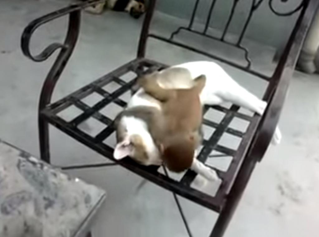 お昼寝中の猫の上で子猿がゴロゴロ転がったり戯れている姿が可愛い!