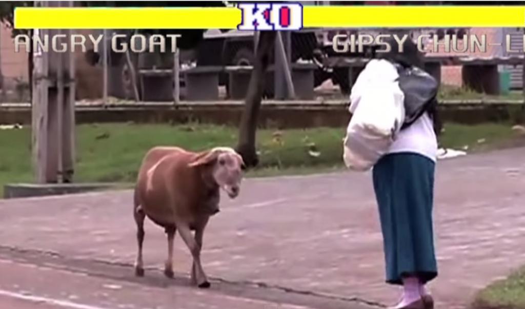 人vsヤギのストリートファイトで3戦連勝のヤギさん強すぎ!