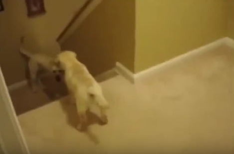 犬と猫の子どもの「しつけ方法」を比較してみた!あまりにも違って驚愕