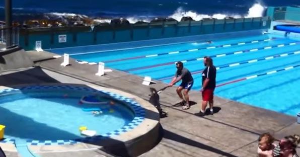 僕もプールで泳ぎたい!アシカが施設に乱入、管理人さんと格闘のすえ。。