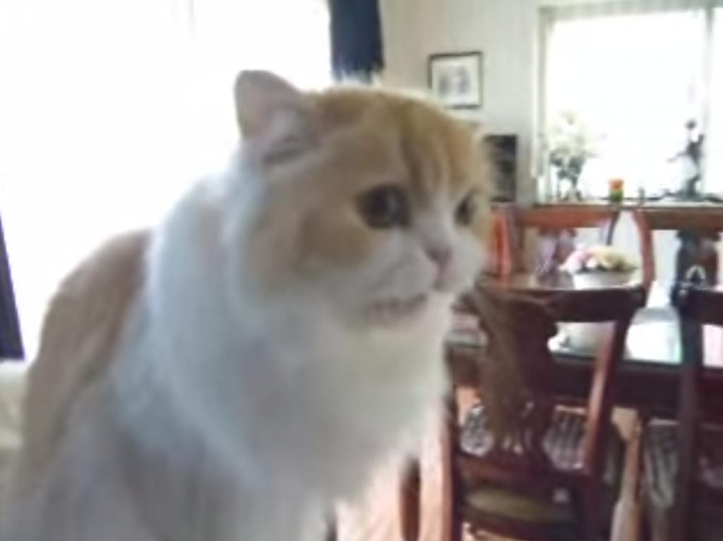 「おはよー」と挨拶する猫マーヤちゃん
