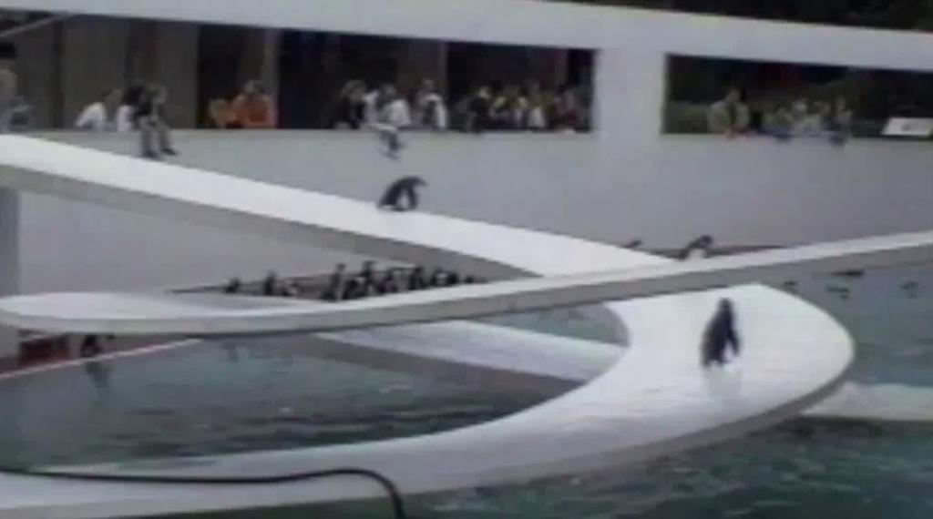 プールへなかなか飛び込めないペンギンの背中を押してくれたのは。。