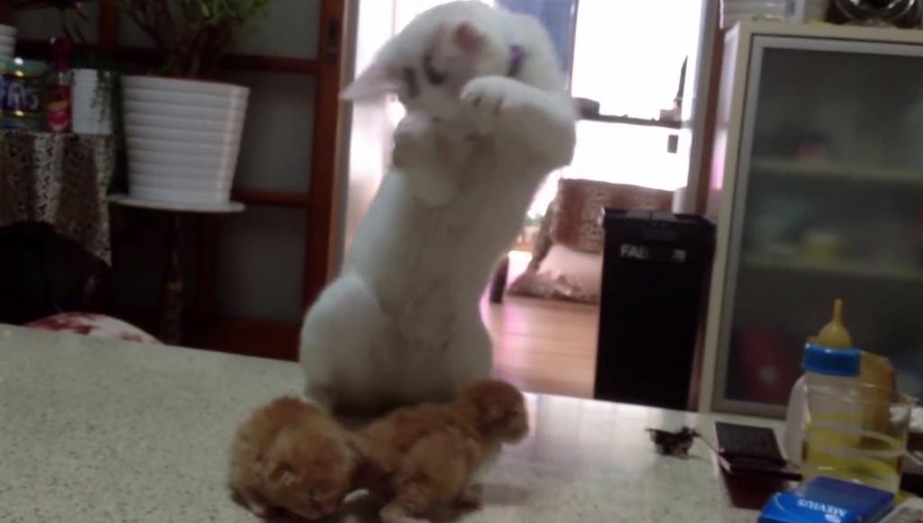 子猫の可愛さに悶える猫