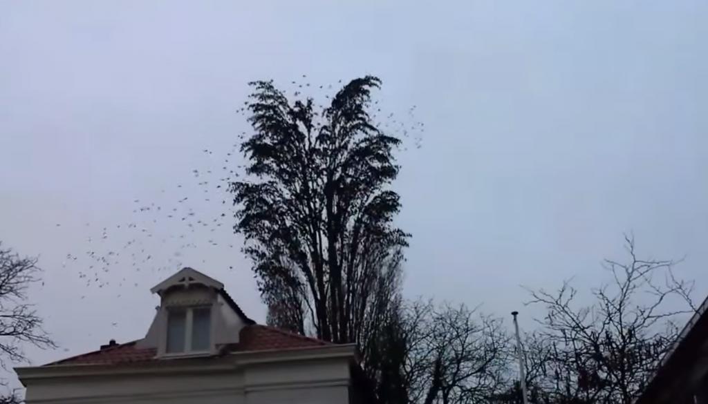 一本の木に集まる鳥たち。驚きの数とは?!