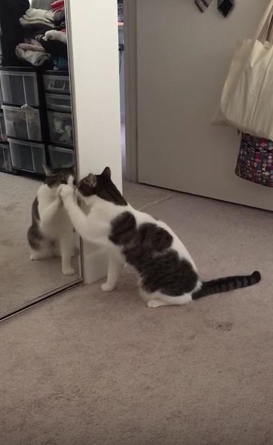 鏡に映る自分にハテナ?な猫が可愛すぎる!
