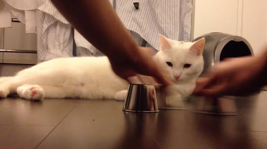 カップ・シャッフルゲームが得意な猫