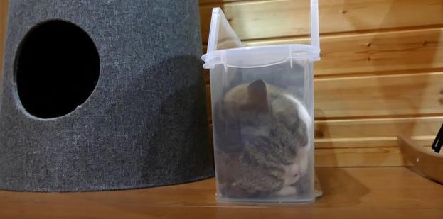 細長なファイルケースにフィットできた猫
