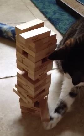 倒しそうで倒さない!「ジェンガ」が上手な猫