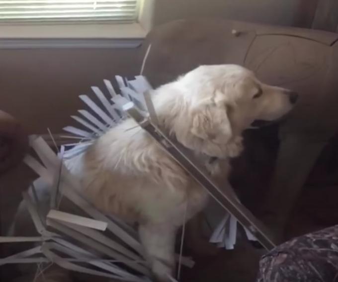 ブラインドを派手に壊しちゃった犬