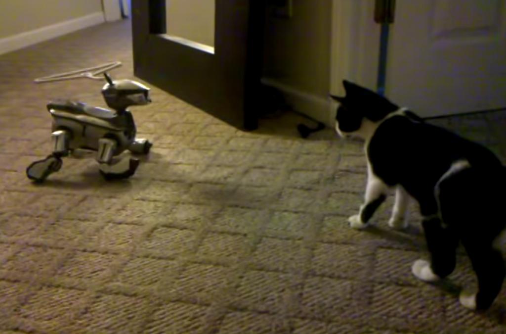 子猫にAIBOを会わせてみると、意外な結果になった!