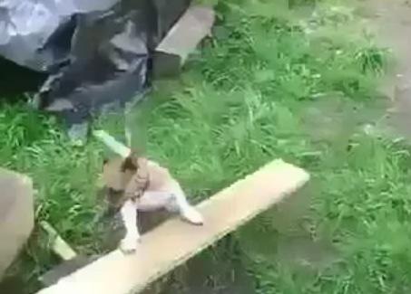 画期的!犬が1匹で「自分でボールを投げ、取りにいく」遊びができるマシーン