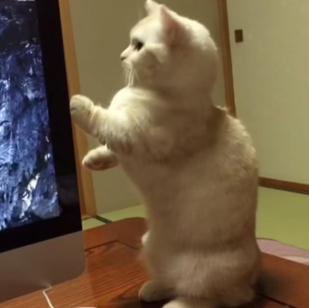 猫の「猫背」が治った瞬間