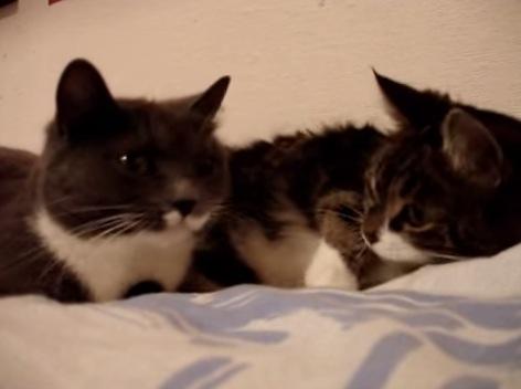猫でも女子はおしゃべり好き!?2匹の猫のガールズトークがカワイイ