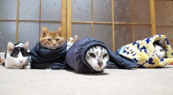 洋服の長袖に入って「ミノムシ」っぽくなっている猫
