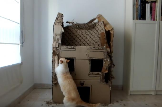 猫3匹にダンボールのお家をあげたら1年後には・・・