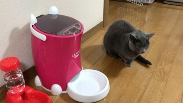 猫に「自動エサやり機」を試してみたら・・・