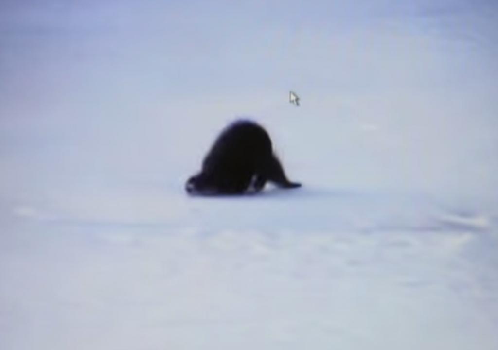 氷上でスライディングを楽しむカワウソがカワイイ!