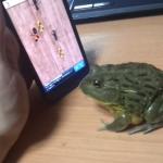 「アリ潰しゲーム」に本気なカエル