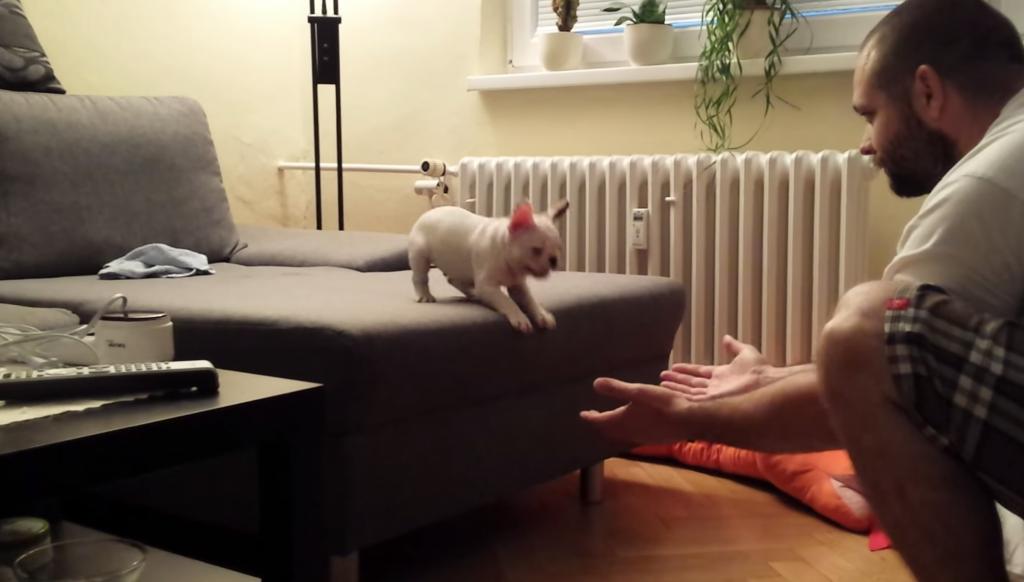 最初は怖がっていたけど。。ソファーの上からジャンプして抱っこされるパグがカワイイ!