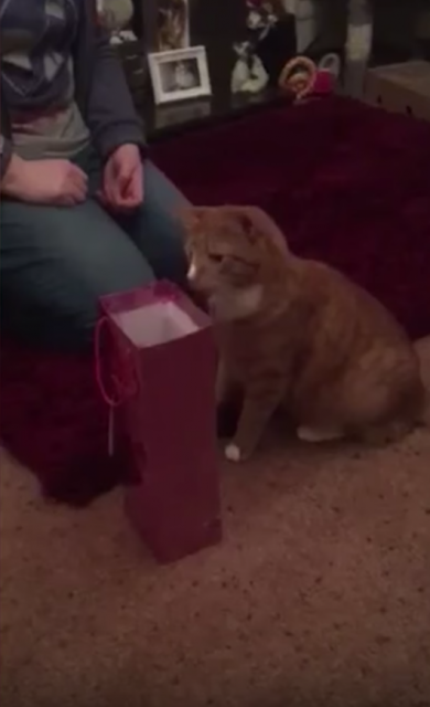 細長い紙袋に頭からダイブする猫