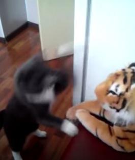 トラのぬいぐるみに見事な連続パンチを喰らわす猫