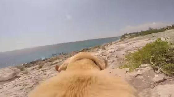 犬ってこんなにカッコいいの!!犬の視界が体感できる動画