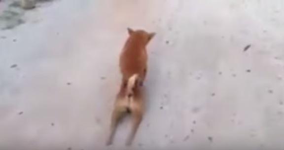 後ろ足を引きずるワンちゃんの衝撃的な結末