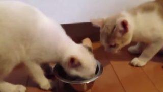 猫の世界の譲り合いの心!!!!?の巻