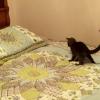 猫にウォーターベッドを与えたら。。