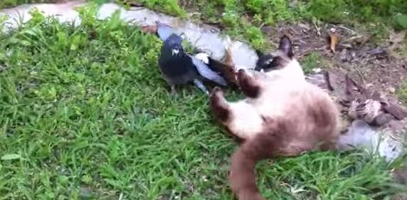 鳩と猫が仲良しすぎてほのぼのする動画