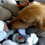 動物たちが〜初めて人間の赤ちゃんと〜出会ったぁ〜
