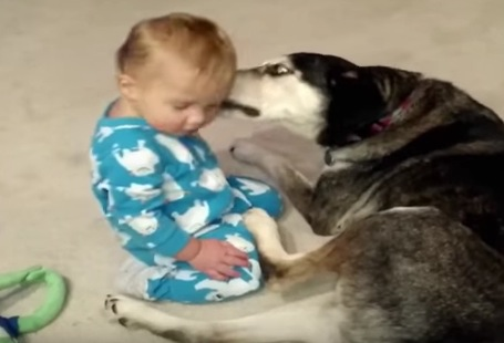 寝落ち寸前の赤ちゃんとそれを見守る犬