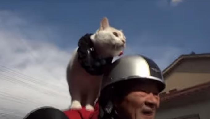 肩乗り猫とおじいちゃんの日常