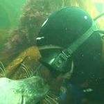 まるでカップルのよう!海中でダイバーとイチャつくアザラシがカワイイ!