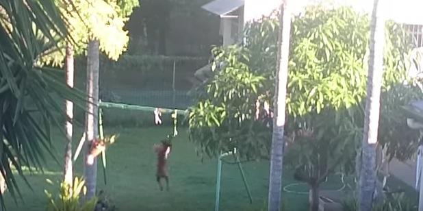 """お庭で""""助走をつけてジャンプ""""を繰り返している犬。そのワケとは。。"""