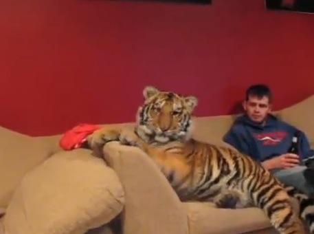 巨大猫と仲良く暮らしている人々が凄い!