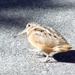 音楽にノリノリな鳥がカワイイ