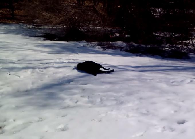 テンション高っ!凍った雪の上を横腹で何度も滑る犬がカワイイ!