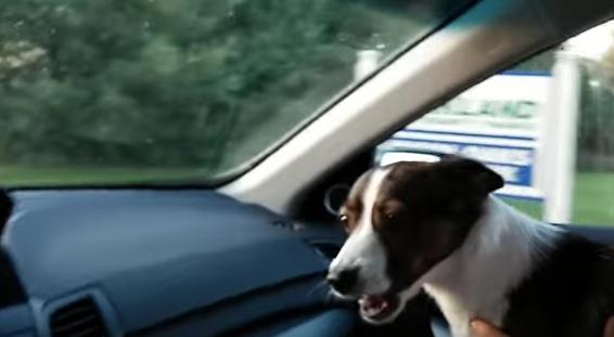 ドックランに歓喜する犬が可愛すぎる!