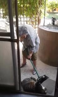 おばあちゃんVSまん丸猫の平和な戦い