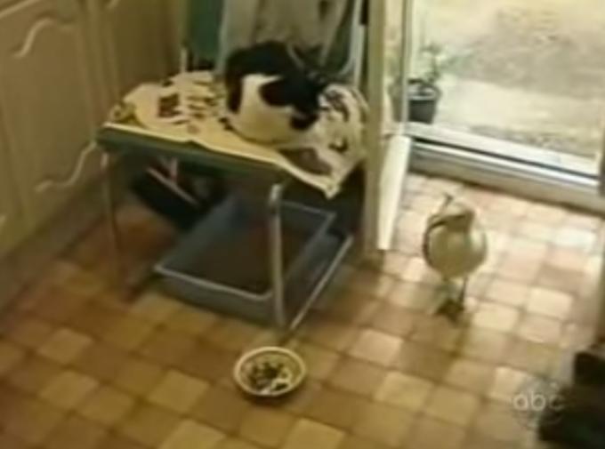 図々しすぎる!猫の目の前にある餌を堂々と盗み喰いする図太い神経の持ち主あらわる
