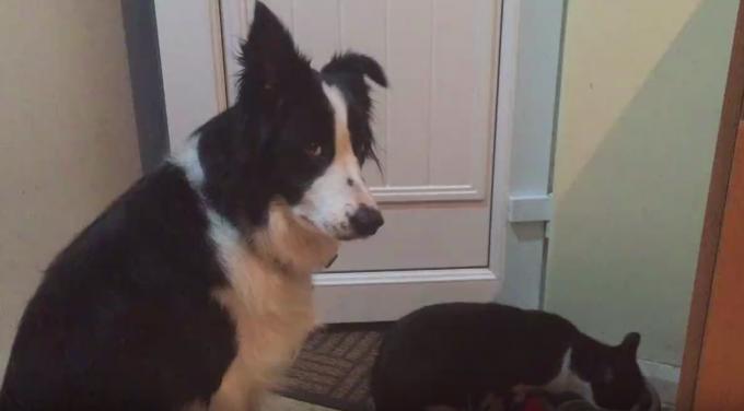 ご飯を盗み食いする猫にツンツンしながら困惑する犬