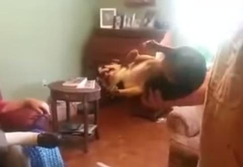 ちょっと切ない〜お父さんが抱き上げると驚くほど硬直する犬。