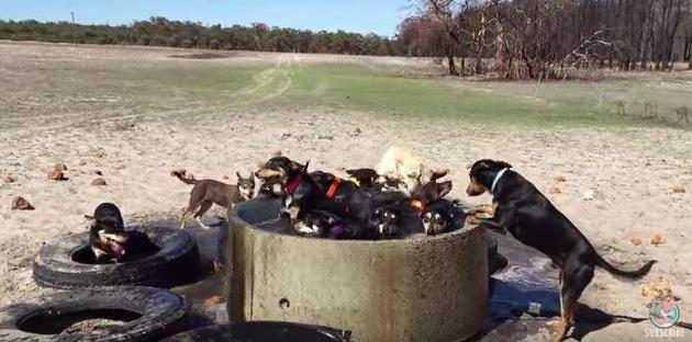 壮大な農場を駆け巡る犬達がカッコいい!