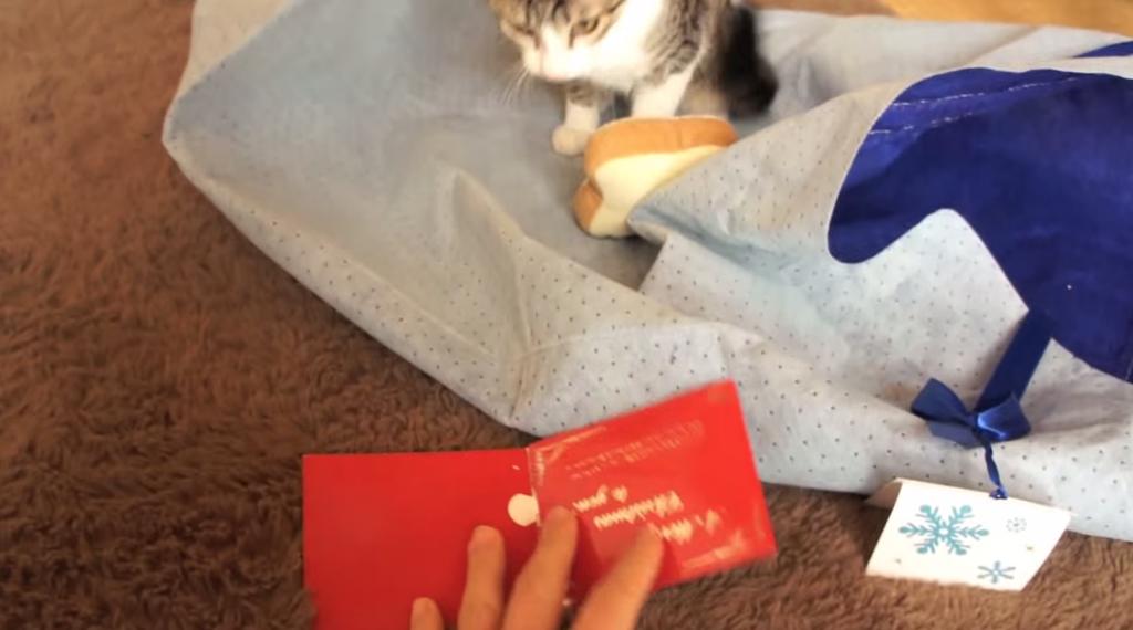 クリスマスソングが嫌いな猫
